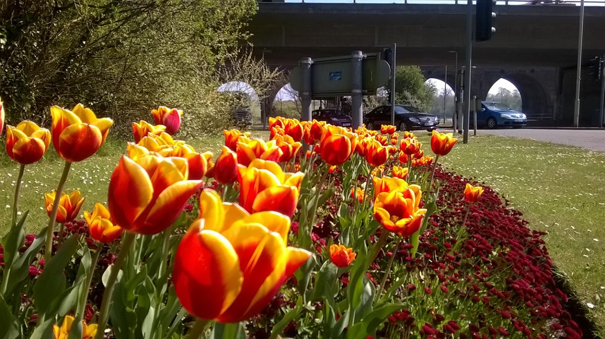 Image De Parterre De Fleurs parterres de fleurs | terracottem