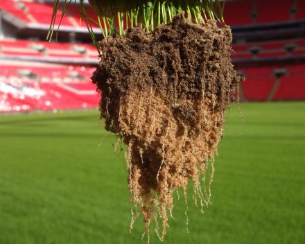 Jači i dublji rast korena.