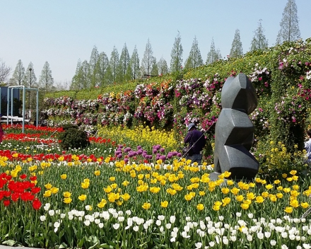TerraCottem Universal en parterres de fleurs, Goyang International Flower Foundation Expo, Corée du Sud.