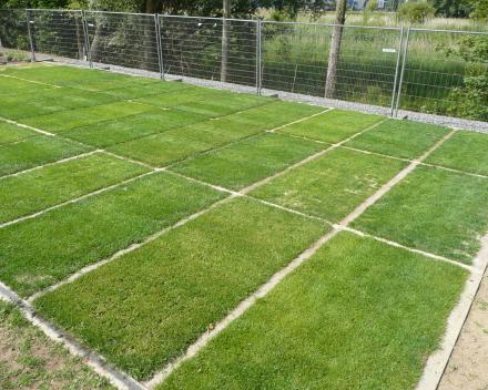 Jači korenov sistem trave i zdraviji busen.