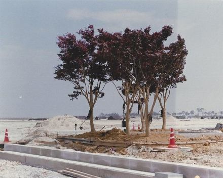 Tree planting with TerraCottem Universal, Incheon International Airport, South Korea.