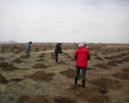 TerraCottem Universal application at the Green Asia Mongolia desertification prevention project.