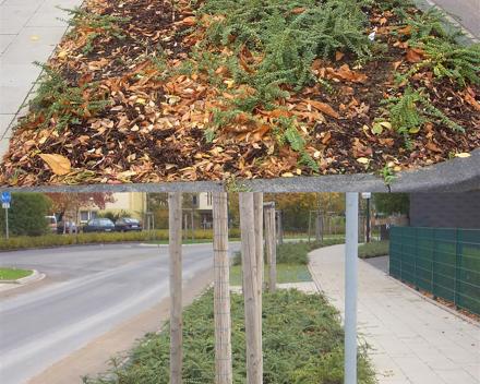 Brži i bolji razvoj biljaka (iznad BEZ TerraCottem-a, ispod SA TerraCottem-om).