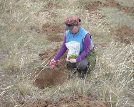 Aplikácia TerraCottem Univerzal aplikovaný na projekte prevencie dezertifikácie v Zelenej Ázii, Mongolosko.