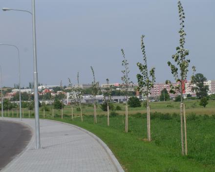 Výsadba stromů obchvat letiště Brno