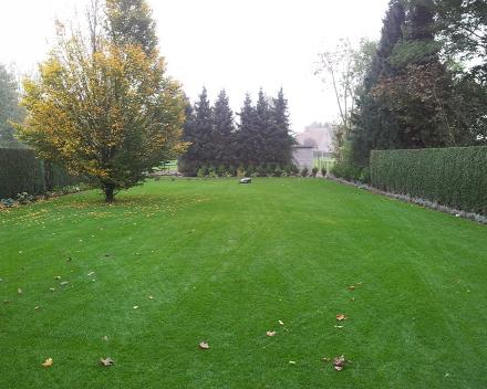 TerraCottem Turf vo vrstve koreňovej zóny zasiatej trávy, Zele, Belgicko.