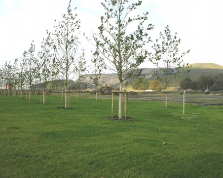Výsadby stromov s úspešnosťou 97,7% v rezidenčnej oblasti v bývalej uhoľnej bani v meste Winsterslag, Belgicko.