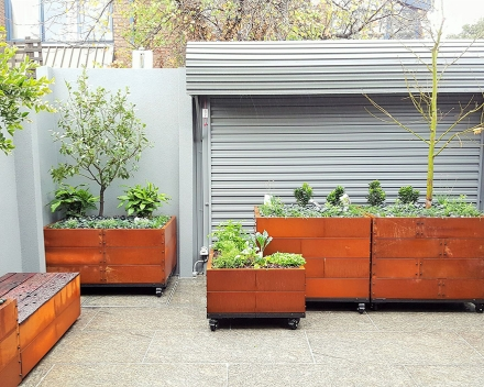 TerraCottem Universal in containers in a residential inner city court yard, Australia.