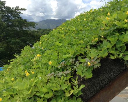 TerraCottem Universal et mur végétal, Santa Fe, Colombie.