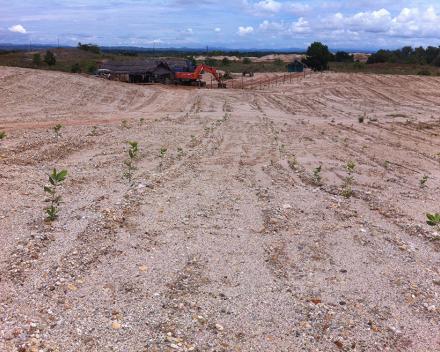 Ecologisch landherstel met TerraCottem Universal op een voormalige goudmijn, Caucasia, Colombië.