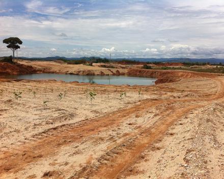 Ekologické zalesňovanie s TerraCottem Univerzal v porchovej zlatej  bani, Caucasia, Kolumbia – 1 mesiac po výsadbe.