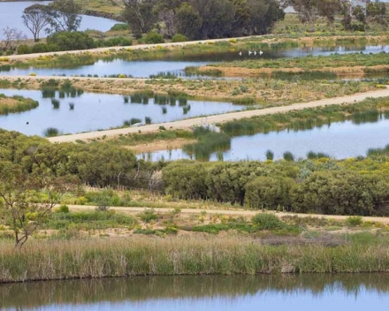 Sewerage ponds into wildlife lakes