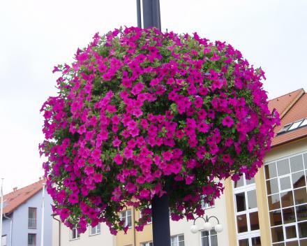 Závěsné květináče Otrokovice