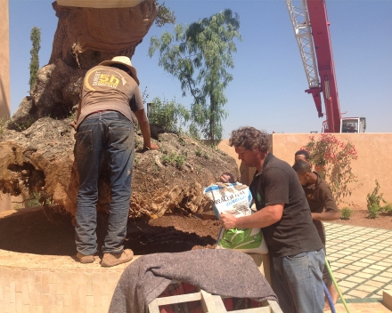 Tree planting with TerraCottem Universal, Marrakech, Morocco.
