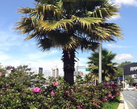 TerraCottem Universal en parterre de fleurs, Belo Horizonte, Brésil.