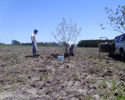 Tree planting with TerraCottem Universal, Santa Ana, Cologne, Uruguay.