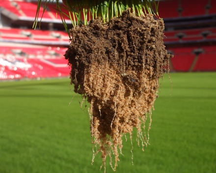 Desarrollo radicular con TerraCottem Turf en el Estadio de Wembley.