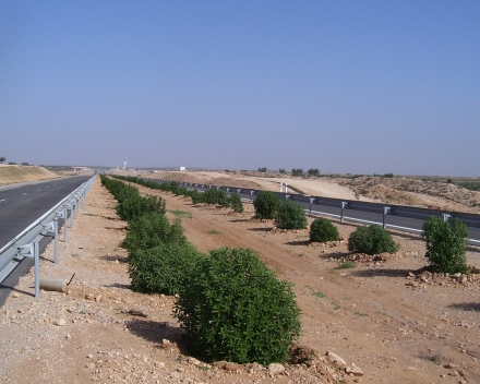 Shrub planting with TerraCottem Universal, Msaken-Sfax Motorway, Tunisia.