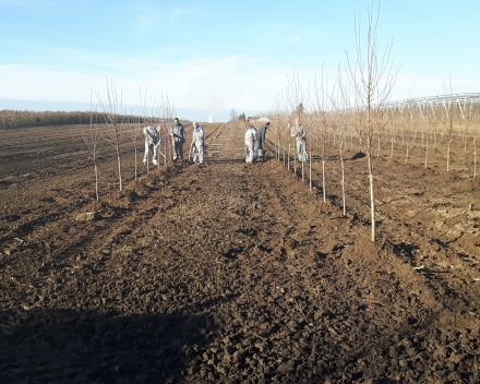 Planting: December 2016