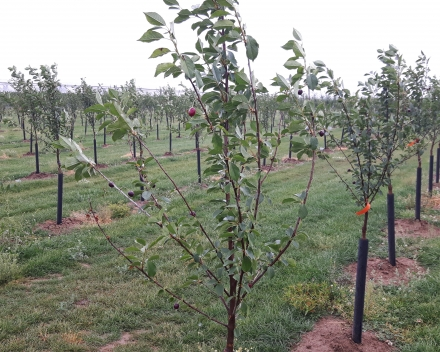 6 months after planting (June 2017)