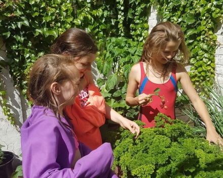 Second place is for Lena Ottevaere from Belgium: this little girl planted veggies and herbs with her friends, using TerraCottem Universal