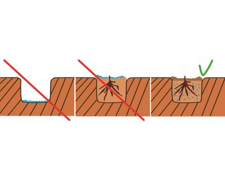 Nedávejte TerraCottem Arbor na dno výsadbové jámy ani na povrch vysazeného stromu. Před samotnou výsadbou smíchejte TerraCottem Arbor rovnoměrně se zeminou a do této směsi vysazujte.