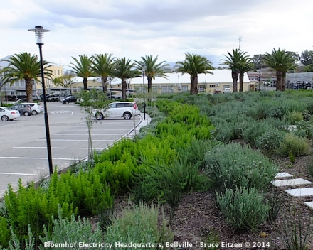 Picture courtesy of New World Associates, Landscape Architects.