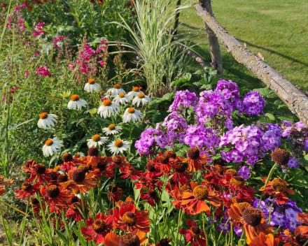 Parterres de fleurs