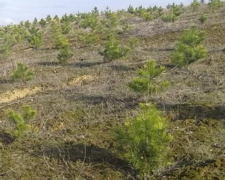 Zaštita zemljišta vetrozaštitnim pojasevima