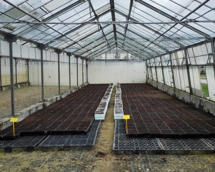 Sown planting trays with TerraCottem Universal recently placed in the greenhouses .