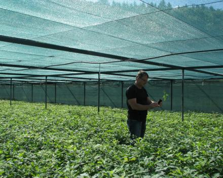 Ing. Ivan Varchol, Head of ŠS Šarišské Michaľany, checks the quality of winter oak seedlings before distribution.