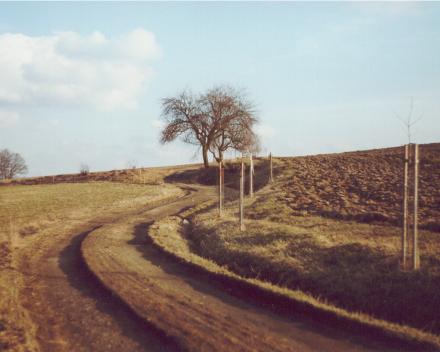 Obnova krajiny – stromořadí podél polní cesty