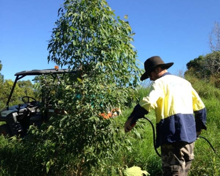 Bush Regenerator, John Cameli, one of Australian Wetland's key staff members on this project sprays herbicide around a one year old tree. Planted with Terracottem to buffer against stress, it's not surprising to see healthy growth like this.