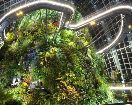 Greening Singapore Even More