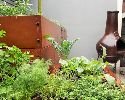Crecimiento de hierbas usando TerraCottem Universal en un patio interior de una ciudad residencial, Australia