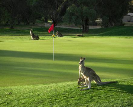 La technologie environnementale TerraCottem au Canberra Federal Golf Club, Australie.
