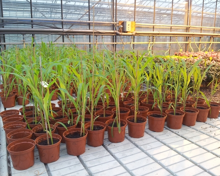 TerraCottem's R&D department is continuously screening new products to improve its soil conditioners' performances.