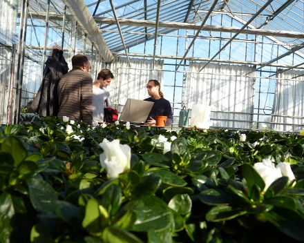 These trials (bioscreening) are carried out in the Belgian Experimental Station for Ornamental Plants in Destelbergen.