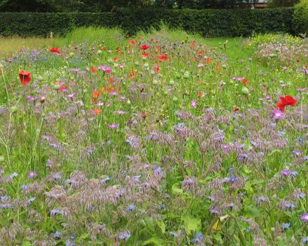 TerraCottem Universal em canteiros de flores.