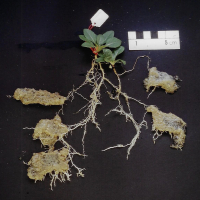 Are plant roots competing with our hydro absorbant polymers for the same water?