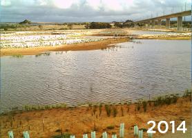 Ekologické zalesňovanie s TerraCottem Univerzal v Christies Beach, Noarlunga Downs, SA, Austrália – nečinná uhoľná elektráreň je spojená s mokraďmi na pobreží – všetkých 187 000 ks lokálnych rastlín bolo vysadených s TerraCottem Univerzal (2014, niekľko mesiacov po vysadení).