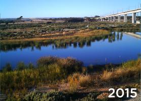 Ekologické zalesňovanie s TerraCottem Univerzal v Christies Beach, Noarlunga Downs, SA, Austrália – nečinná uhoľná elektráreň je spojená s mokraďmi na pobreží – prežilo 95+% rastlín (2015).