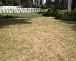 Hoe maak je een tuin bestendig tegen hete zomers?
