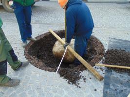 TerraCottem Arbor - 10kg