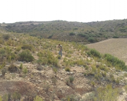 TerraCottem Arbor has been developped in the framework of the EU SustAffor project.