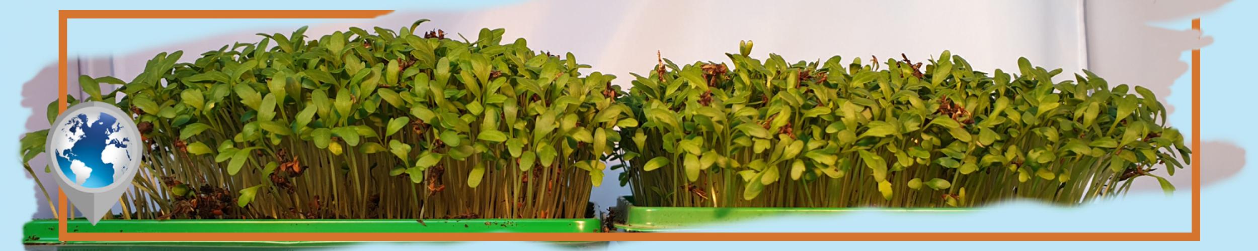 Los precursores de crecimiento de TerraCottem despliegan su magia en el crecimiento de las raíces y de las plantas