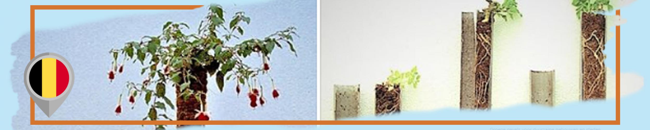 An interesting experiment on tree saplings by Prof. Dr. Willem Van Cotthem (Ghent University, Belgium)