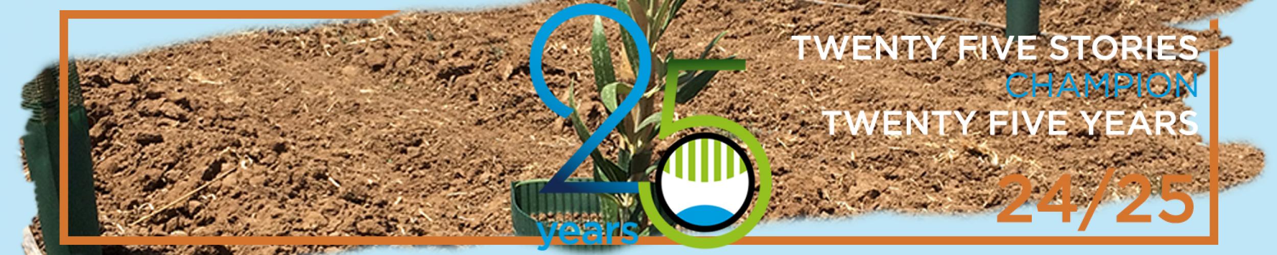 Alta tecnología en plantación superintensiva de olivo