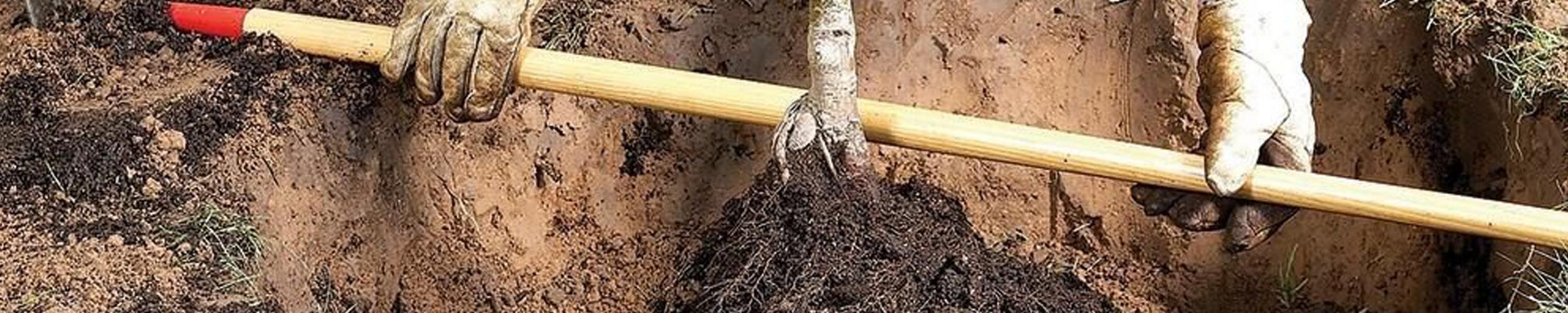 Optimale grootte plantgat & bodemverbetering voor succesvolle boomaanplantingen