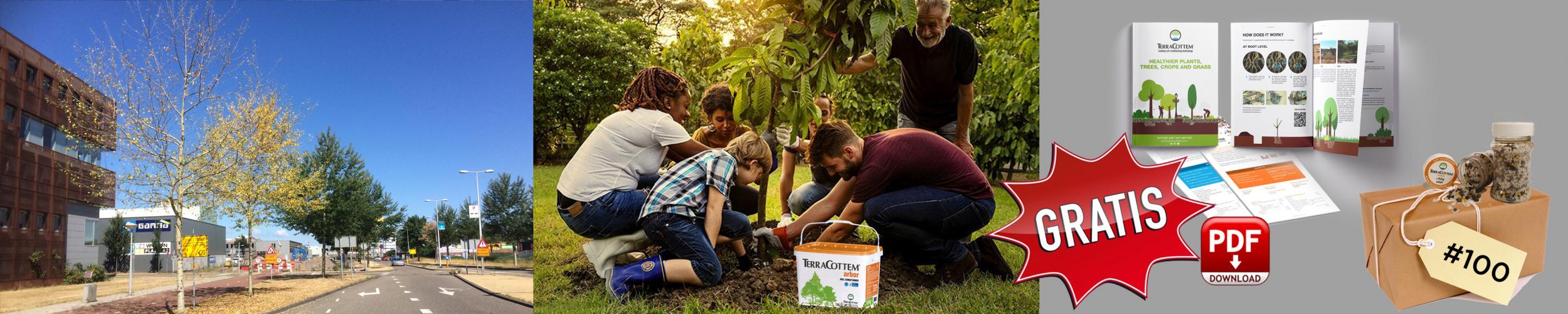 Bescherm uw bomen tegen droge en hete zomers